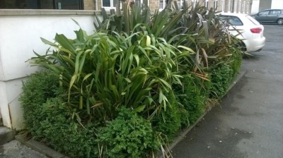 commercial-grounds-maintenance-maidstone