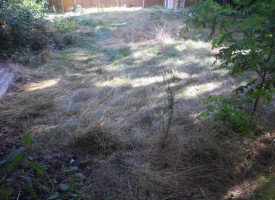 garden-clearance-and-renovation