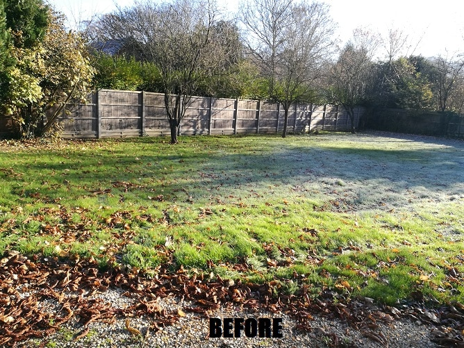 lawn-before-mowing