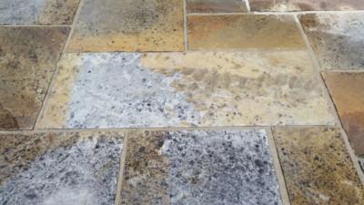 black-lichens-on-stone-patio
